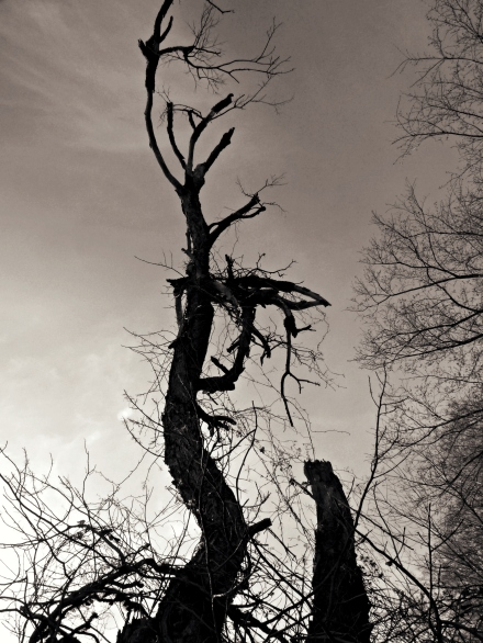 'Dead Tree' Life & Death series by EratoAmused