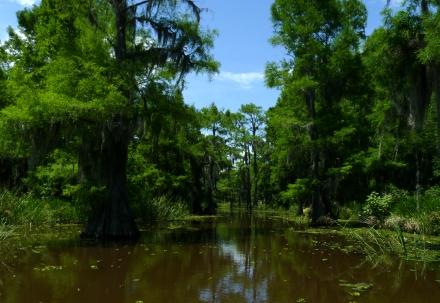 Caddo Lake Swamp TX, 2013